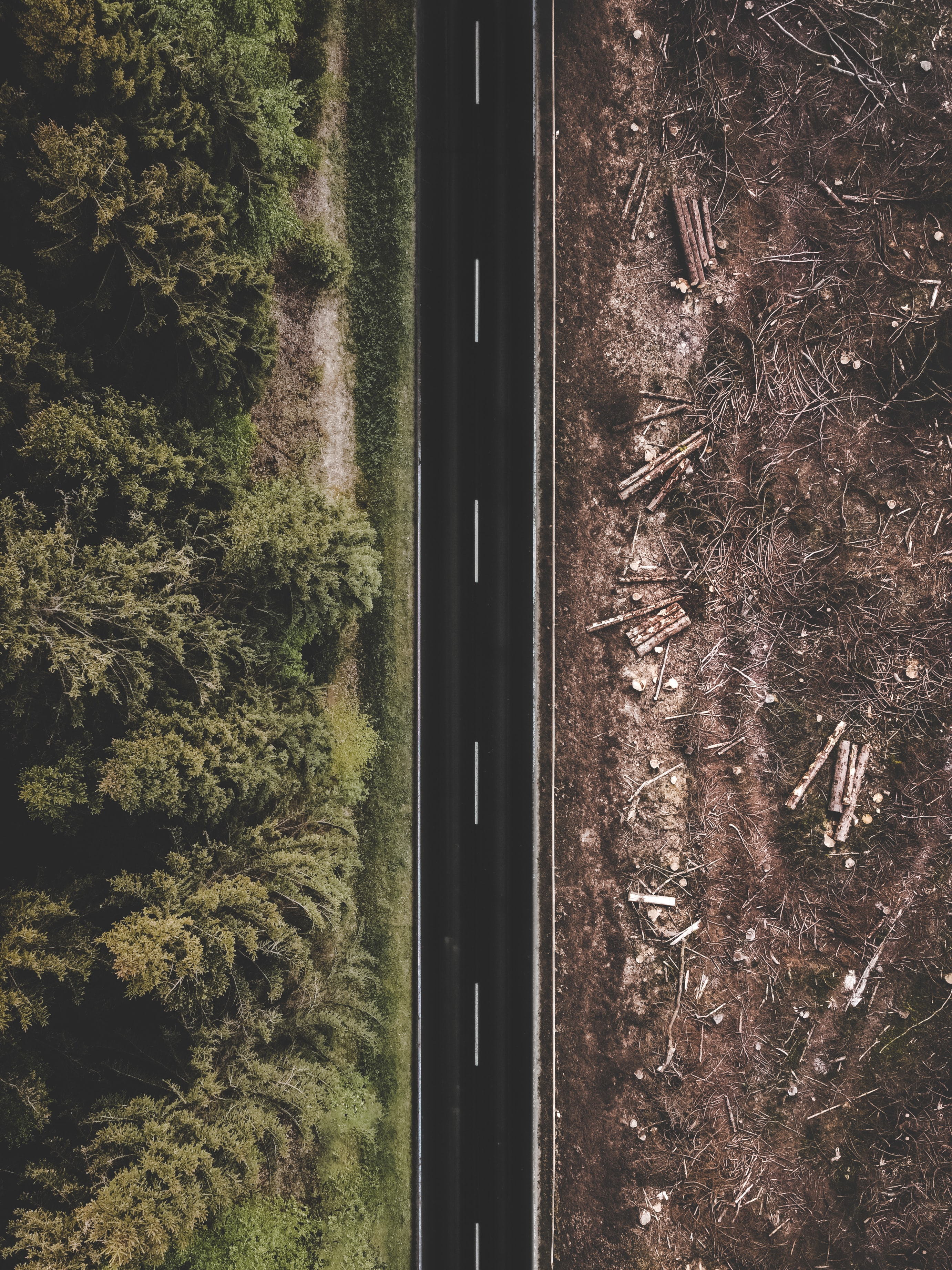 (Français) L'équivalent d'un terrain de foot de forêt détruit toutes les six secondes dans le monde