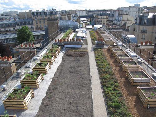 Levez la tête, les jardins et potagers investissent les toits de Paris!