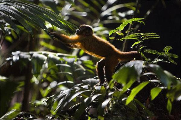 Amazonia : immersion au cœur de la forêt amazonienne