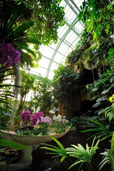 Exhibition: Mille et une Orchidées d'Asie