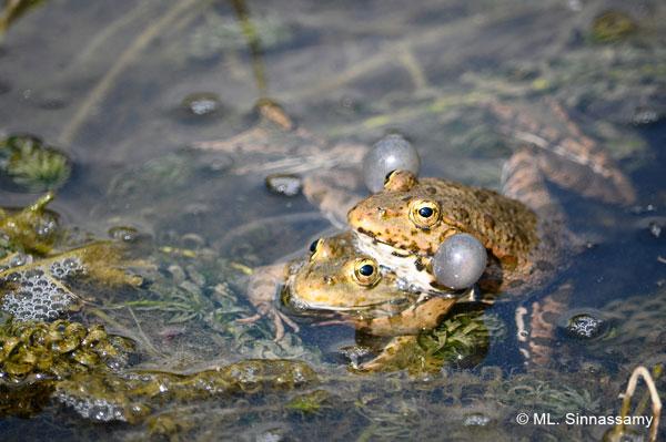 Exhibition: Les Amphibiens de Paris