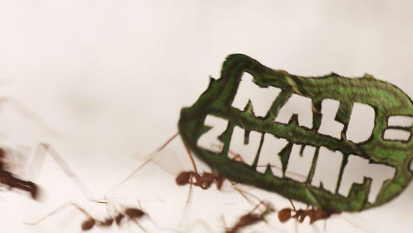 Ant Rally : quand les fourmis manifestent contre la déforestation en Amazonie