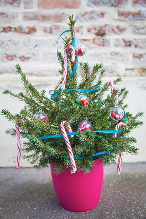 My Little Sapin : commandez un sapin de Noël durable en un clic !
