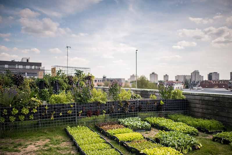 Le Jardin Suspendu: the garden rooftop of South Paris