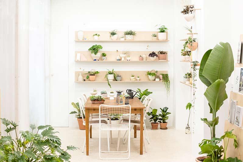 Leaf: the Village Saint-Martin's plant concept store