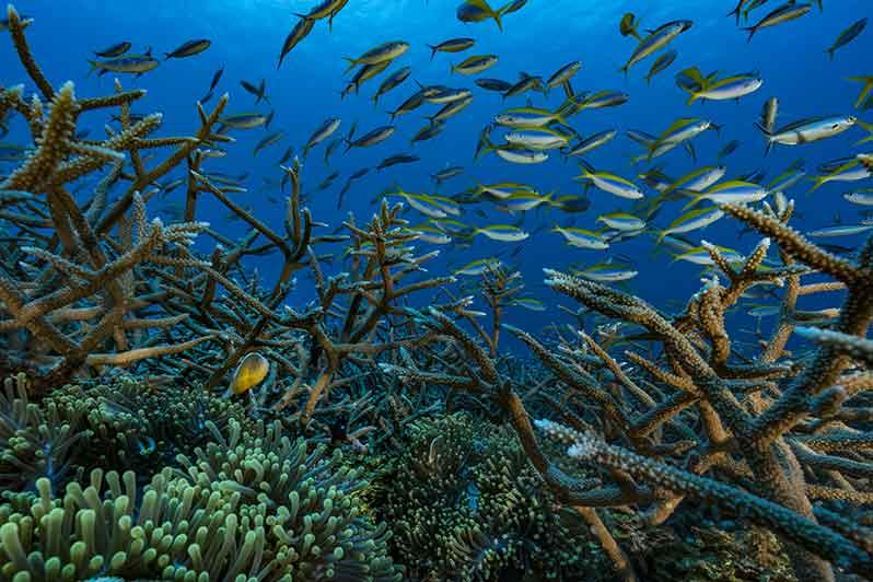Exhibition: Coral reefs, a challenge for Humanity