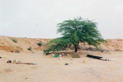 Exposition : Ron Amir. Quelque part dans le désert
