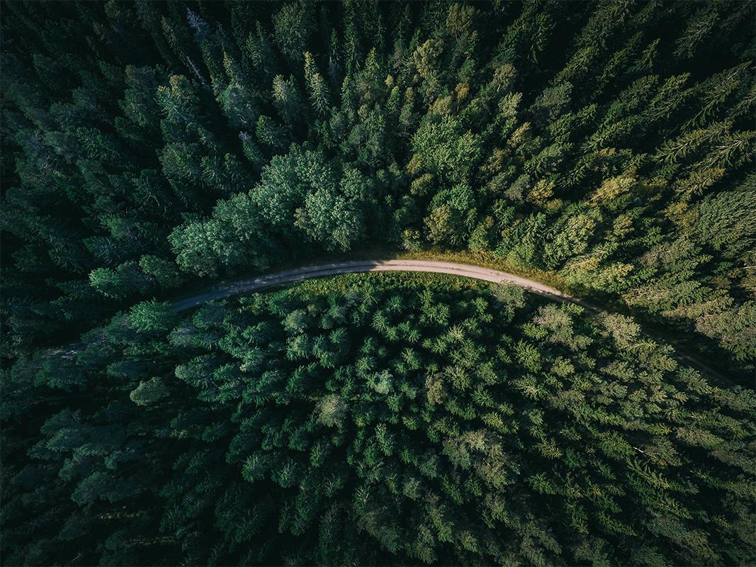 La biodiversité des forêts naturelles, un atout contre le réchauffement climatique