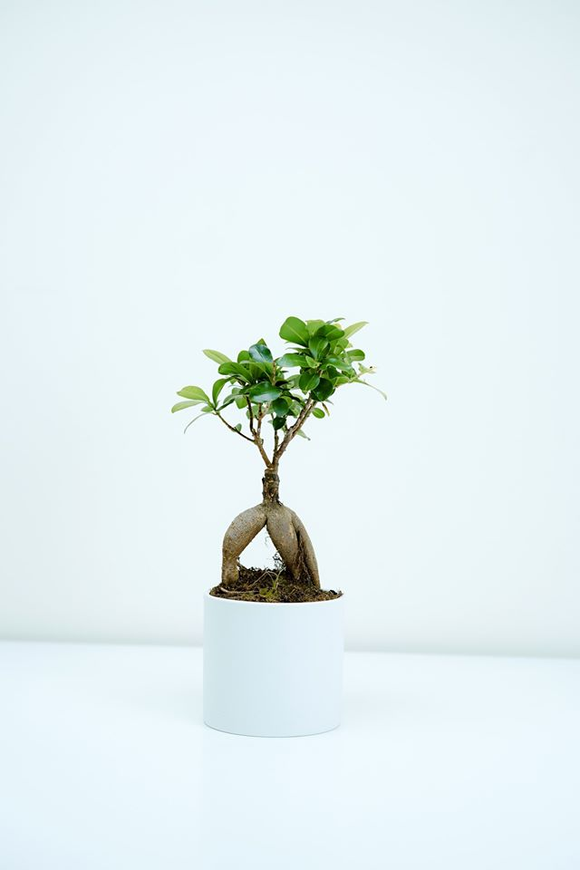 Which houseplants for a healthy environment?