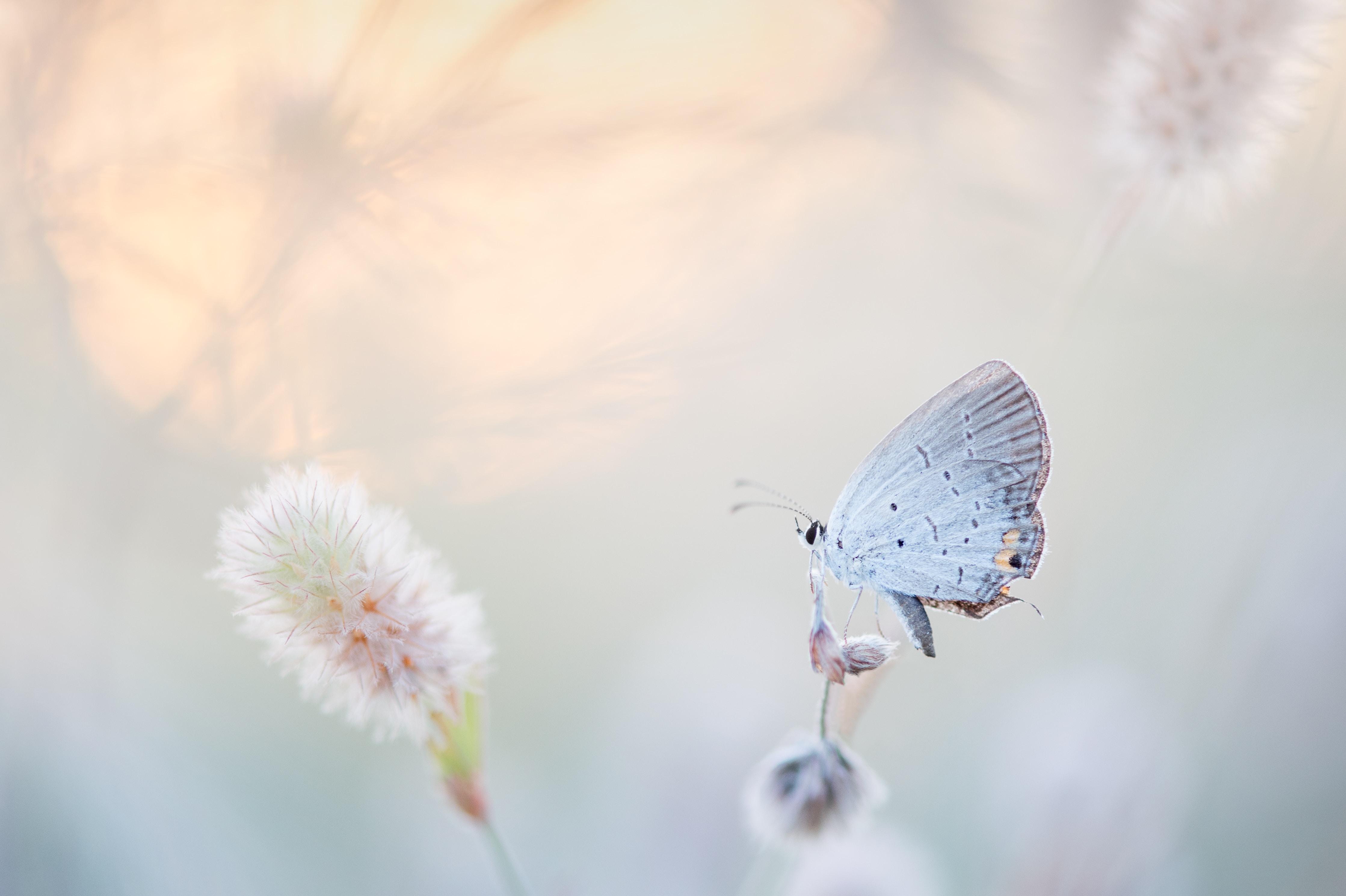 (Français) Le déclin des insectes plus important que prévu?