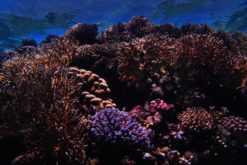 How the world is coming together to save coral reefs